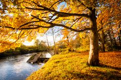 Beautiful Autumn in the Park, Scotland. Beautiful, golden autumn scenery with trees and golden leaves in the sunshine in Scotland royalty free stock photos