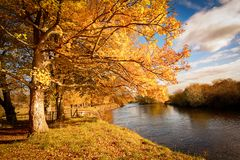 Beautiful Autumn in the Park, Scotland. Beautiful, golden autumn scenery with trees and golden leaves in the sunshine in Scotland royalty free stock photography
