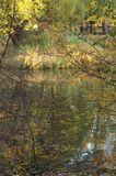Beautiful autumn park. Sunlight through Trees, autumn forest stock image