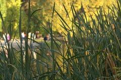 Beautiful autumn park. Sunlight through Trees, autumn forest royalty free stock image