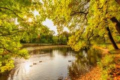 Beautiful autumn park on Yelagin Island Royalty Free Stock Photos