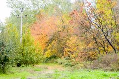 Beautiful autumn park. Yellow leaves on the trees. Stock Images