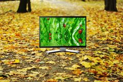 Beautiful autumn park with yelow leaves Royalty Free Stock Photography