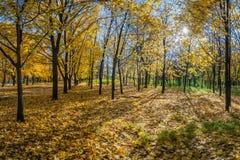 Beautiful autumn parkland Stock Photos