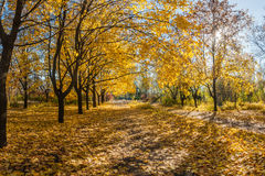 Beautiful autumn parkland Royalty Free Stock Images