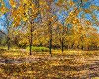 Beautiful autumn parkland Stock Image