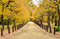 Beautiful Autumn Pathway In The Park Stock Photo