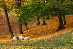 Beautiful autumn photography Stock Photography