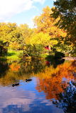 Beautiful Autumn Pond With Ducks And Trees Reflected In Water Stock Image