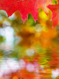 Beautiful autumn red oak leaves reflection Royalty Free Stock Photo