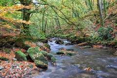 Beautiful Autumn River Royalty Free Stock Images
