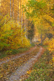 Beautiful autumn scene Royalty Free Stock Image