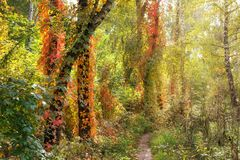 Beautiful autumn scene in the forest stock photography