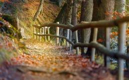 Beautiful autumn scene invites to walkon a misty footpath in the forest. Beautiful autumn scene invites to walk Stock Photos