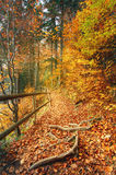 Beautiful autumn scene invites to walkon a misty footpath in the forest. Royalty Free Stock Photos