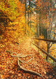 Beautiful autumn scene invites to walkon a misty footpath in the forest. Royalty Free Stock Photo