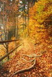 Beautiful autumn scene invites to walkon a misty footpath in the forest. Royalty Free Stock Images