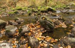 Part of mountain creek. Swiss Royalty Free Stock Image