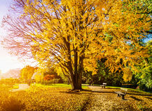 Beautiful autumn scene in park at sunrise Stock Photography