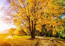Beautiful autumn scene in park at sunrise Stock Photos