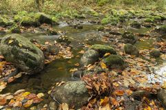 Part of mountain creek. Suisse Royalty Free Stock Images