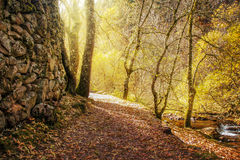 Beautiful autumn scene of a path showing sunlight through trees Royalty Free Stock Image