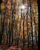 Beautiful autumn scene with trees and colorful leaves Stock Image