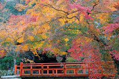 Beautiful autumn scenery of colorful maple trees by a red bridge in Kyoto, Japan Stock Image