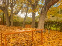 Beautiful autumn scenery with falling leaves of the trees. royalty free stock photos