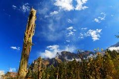 Beautiful autumn scenery in Hailuogou glaciers park Stock Photos