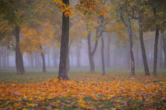 Beautiful Autumn Scenery In The Forest Stock Photos