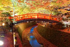 Beautiful autumn scenery of a Japanese Garden in Kitano Tenmangu Shrine Temple in Kyoto Japan. With view of a red arch bridge over a stream and fiery foliage Stock Images