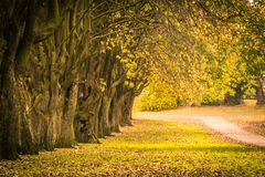 Beautiful autumn scenery with line of trees and and a road in the park,. Scotland royalty free stock photos