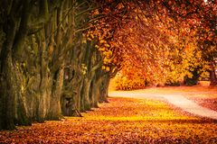 Beautiful autumn scenery with line of trees and and a road in the park, Scotland. UK stock photography