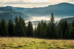 Beautiful autumn scenery in mountains at sunrise. Spruce forest in foggy valley. beautiful autumn scenery in mountains at sunrise. view from the hill stock photo