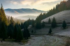 Beautiful autumn scenery in mountains. At sunrise. spruce forest on the hill. fog rise in the distant valley stock images