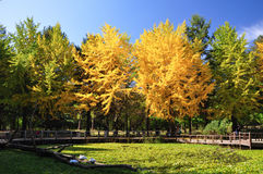 Beautiful autumn scenery at Nami Island. South Korea Royalty Free Stock Images