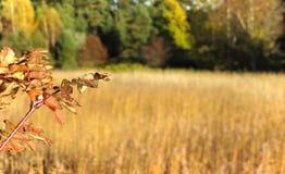 Beautiful autumn scenery panorama Stock Photos