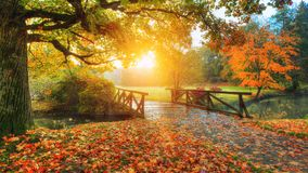 Beautiful autumn scenery in park. Outdoor photography in sunrise light royalty free stock image