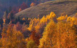 Beautiful autumn scenery in a remote mountain location Stock Photography