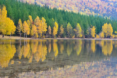 Beautiful autumn scenery, volcanic lake and forest Stock Image