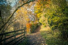 Beautiful autumn in Scotland with a rural road and wooden fence. UK stock image