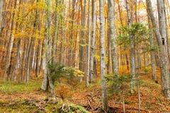 Beautiful autumn season forest Stock Photo