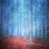 Beautiful autumn season forest with snowfall stock images
