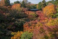 Beautiful autumn season in Kyoto. Stock Photos