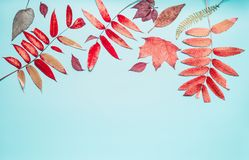 Beautiful autumn seasonal composing or border made with various colorful fall leaves on turquoise blue background, top view Royalty Free Stock Photos