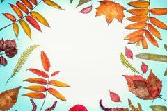 Beautiful autumn seasonal composing or border made with various colorful fall leaves on turquoise blue background, top view Stock Photography