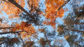 Beautiful autumn, summer season forest with sun rays through the leaves. stock photography