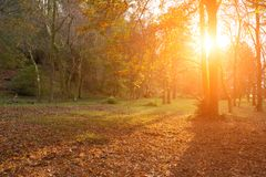 Beautiful autumn sunny landscape with trees. And dry leaves Royalty Free Stock Image