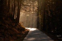 Beautiful autumn sunny photo taken in Beskid mountains Stock Photos